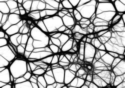 neurons-440660_1920